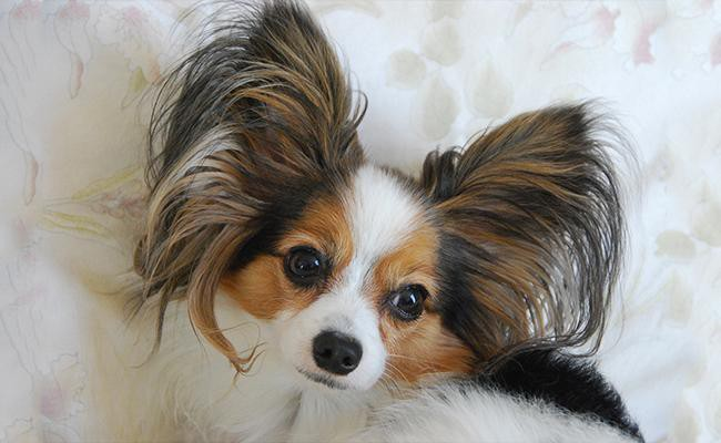 ideal-dogs-for-firsttime-dog-owners