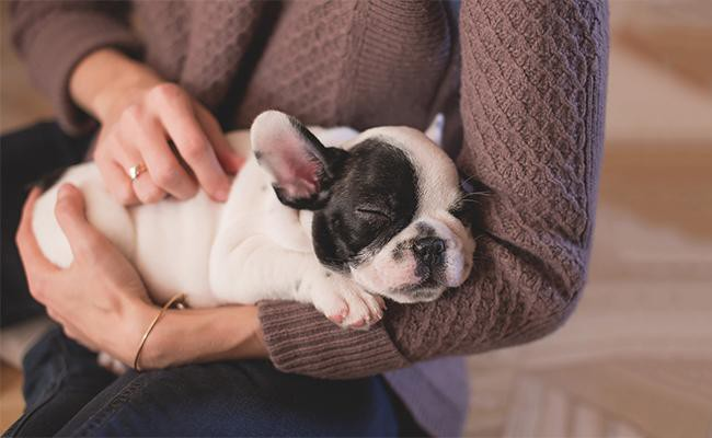 useful-tips-for-first-time-dog-owners