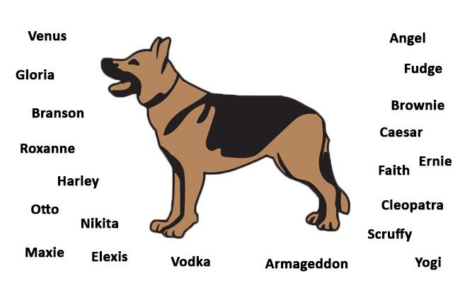 German Shepherd - Dog Breed Information And Health ...
