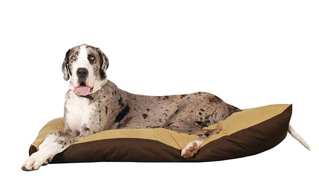 great-dane-breed-characteristics-sheet