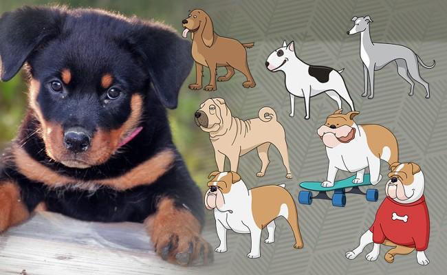breeds - Happy Puppy