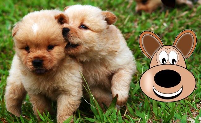 healthy-and-happy-puppy - Happy Puppy