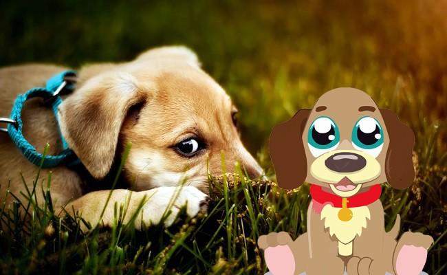 symptoms-of-unhealth - Happy Puppy