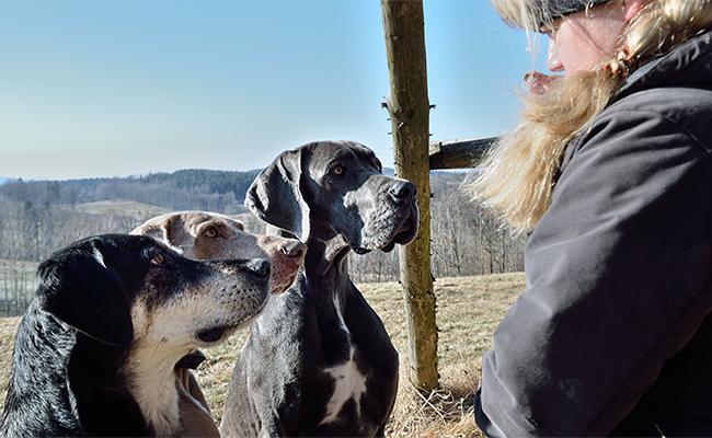 dog-communication-sense-and-sensibility