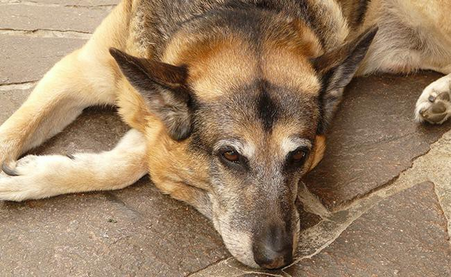 physical-changes-undergone-by-a-rehomed-dog