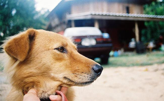 tips-to-follow-at-home-after-the-arrival-of-the-new-dog