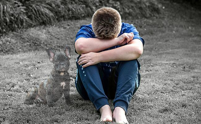 mourning-for-our-pets