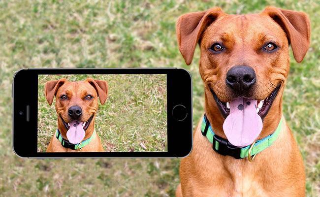 important-pet-camera-features