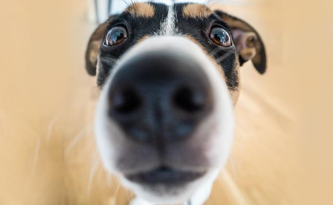 latest-pet-camera-features