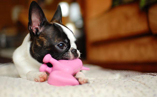 mind-stimulation-training-through-using-puzzle-toys - How To Train Your Dog