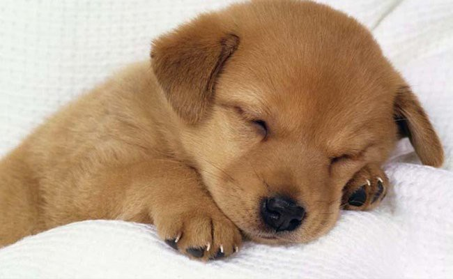 sleep-related-training-for-the-dog - How To Train Your Dog