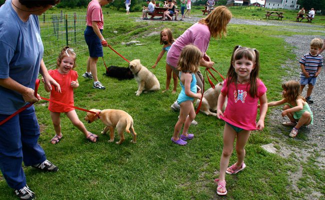 socialization-training - How To Train Your Dog