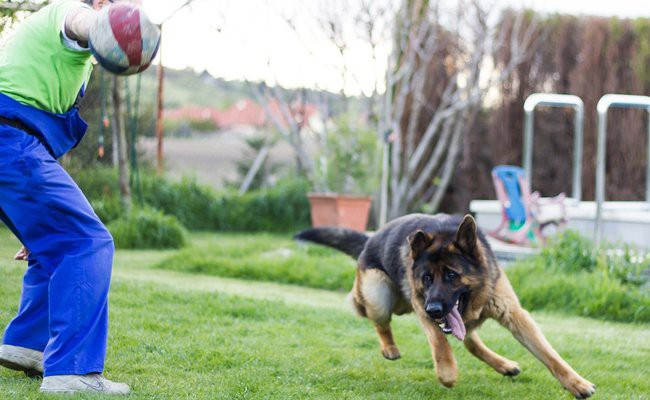 visual-stimulation - How To Train Your Dog
