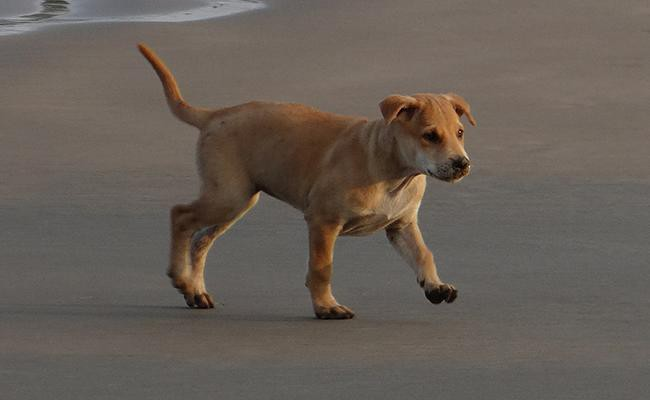 tamil-dog-names