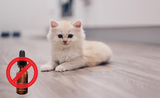 why-is-lemongrass-essential-oil-toxic-to-cats