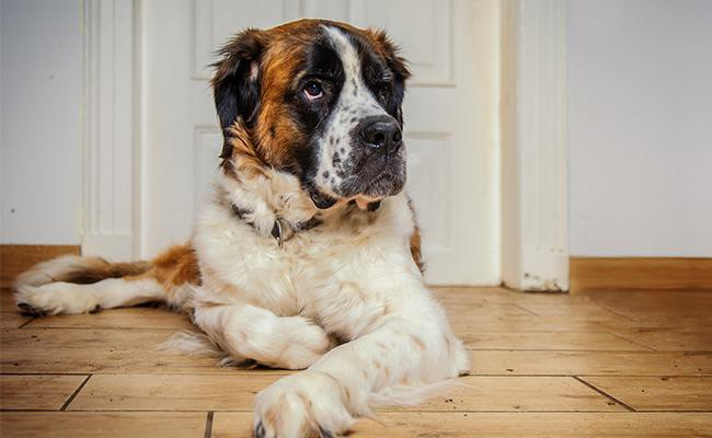 strong-italian-female-dog-names