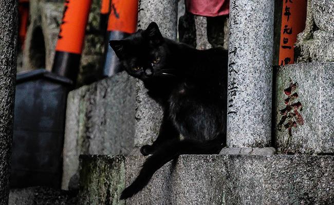 japanese-black-cat-names