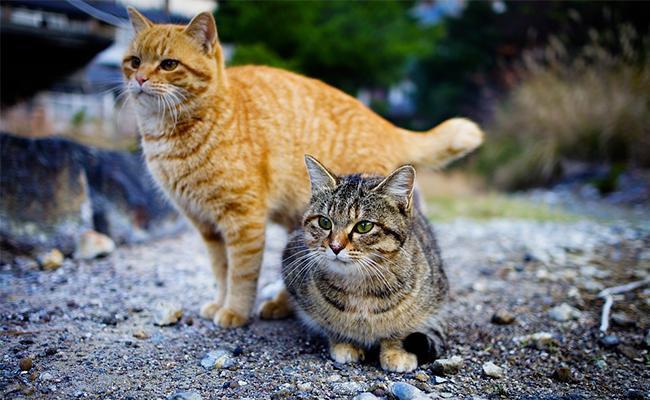popular-japanese-cat-names