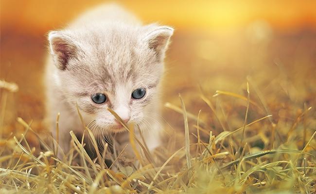 korean-cat-names-females