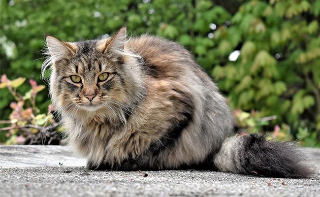korean-cat-names-male