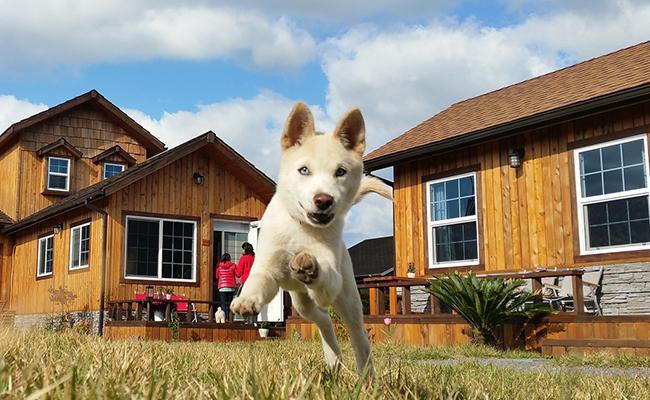 jindo-dog-names