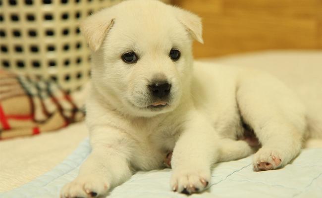 korean-names-for-male-dogs