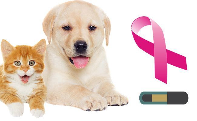 can-microchips-cause-cancer-in-pets - Microchipping Your Pet