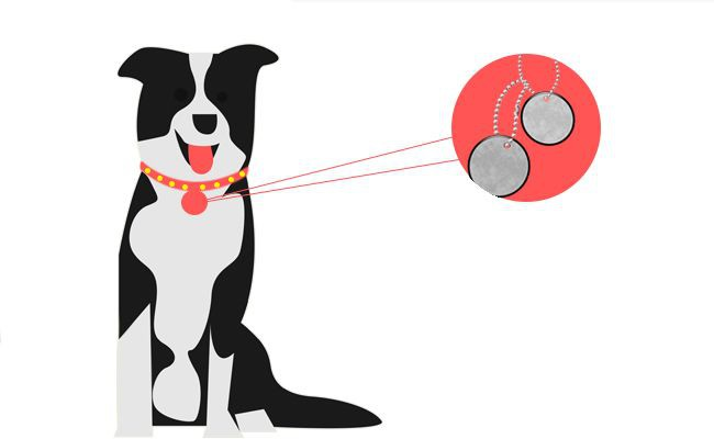 do-i-need-to-tag-my-pet-even-after-getting-him-micro-chipped - Microchipping Your Pet