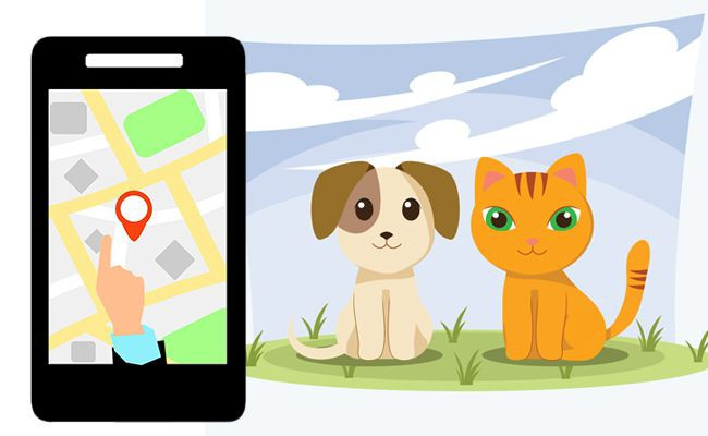 how-microchips-help-you-track-your-lost-pet - Microchipping Your Pet