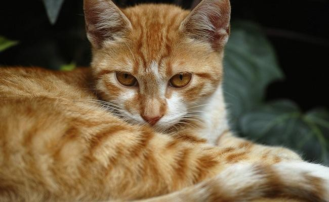 female-orange-cat-names