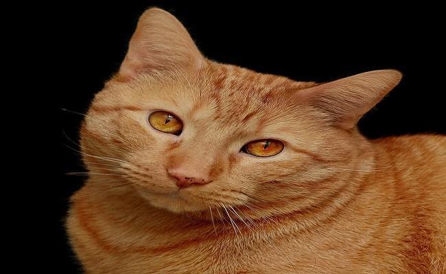 funny-orange-cat-names