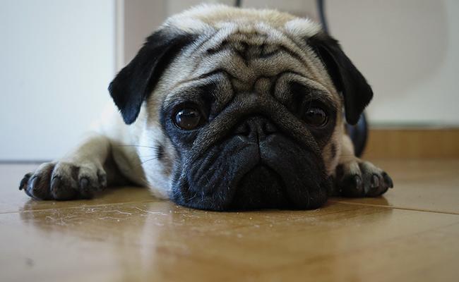 dog-depression-causes