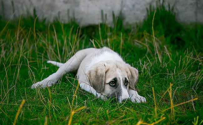 dog-depression-recovery