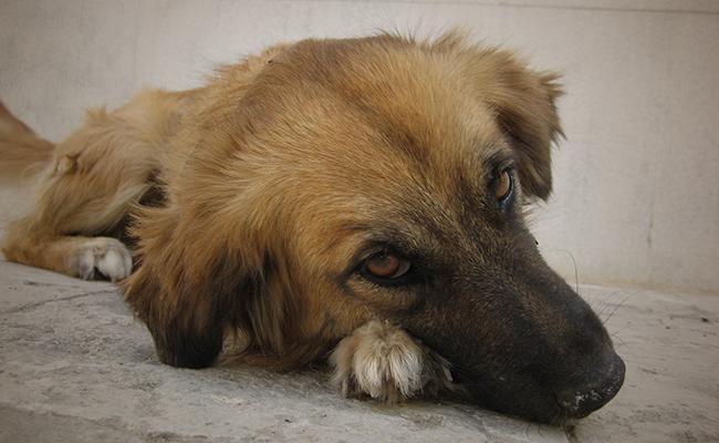 dog-depression-treatment
