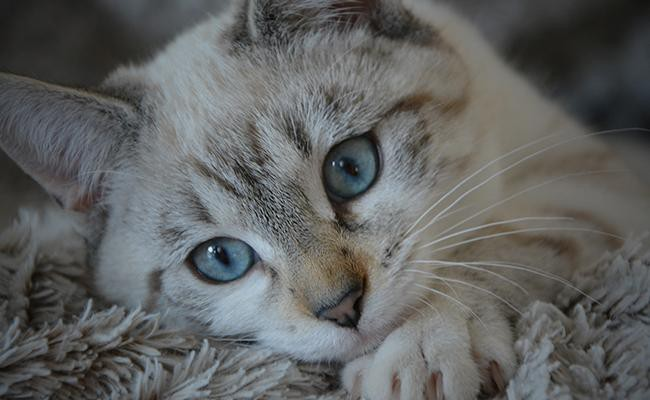 how-to-prevent-depression-in-cats