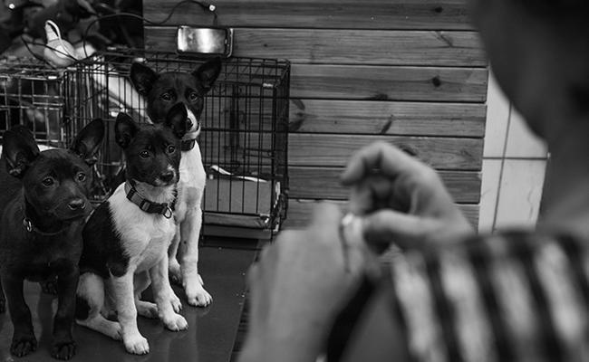 pet-adoption-choosing-the-right-pet