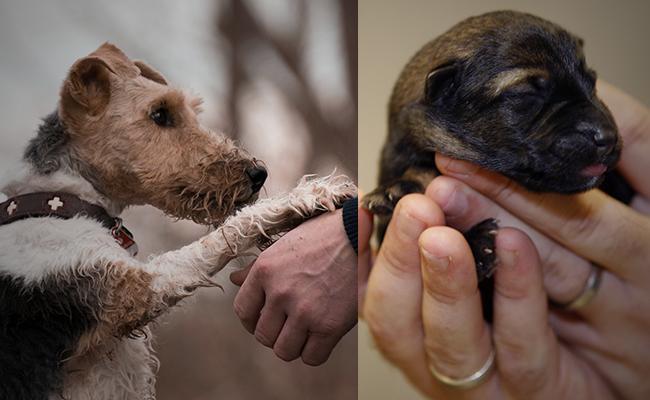 pet-adoption-vs-buying-a-pup