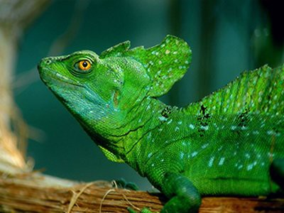 amphibians-and-reptiles-pet-friendly-homes