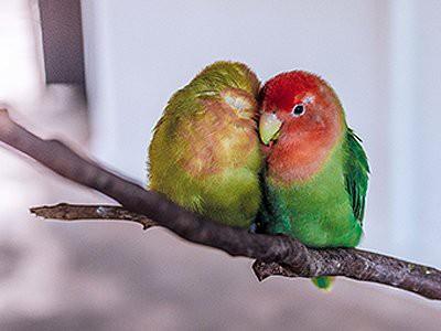birds-pet-friendly-homes