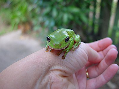 frogs-pet-friendly-homes