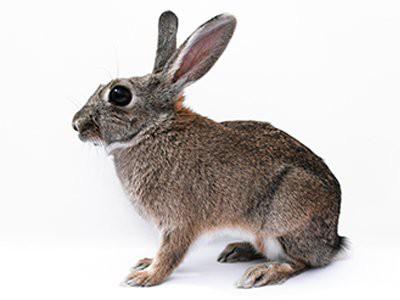 rabbits-pet-friendly-homes