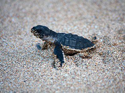 turtles-pet-friendly-homes