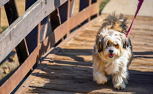 walk-your-pets-frequently - Pets Travel