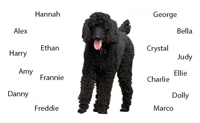names-of-poodle-dogs