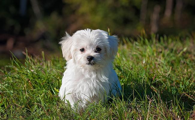 dogs-popular-house-pets