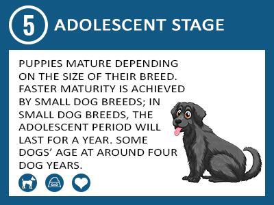 adolescent-stage