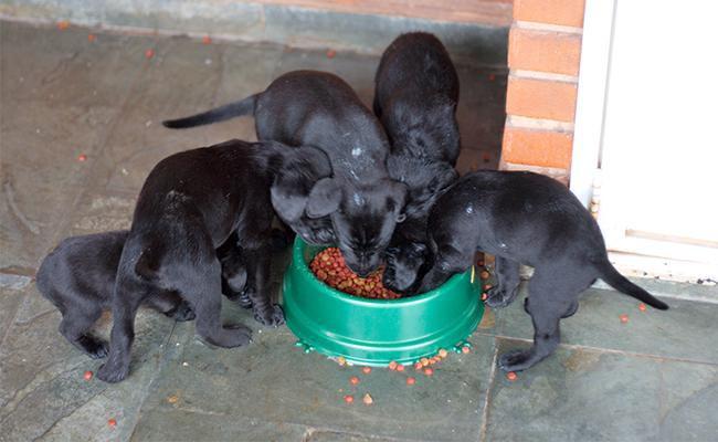 feeding-puppy-essentials