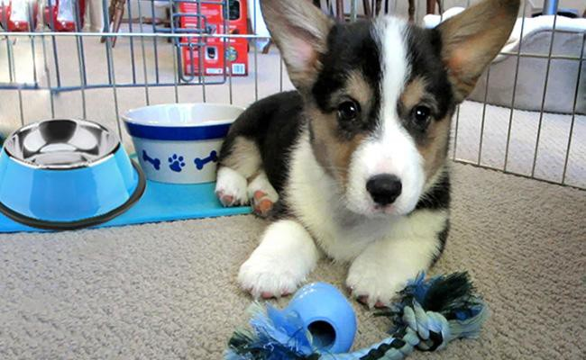 be-prepared-well-in-advance - Puppy First Day Home