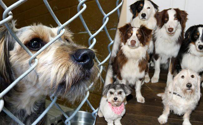rescue-dogs-vs-breeders - Rescue Dogs