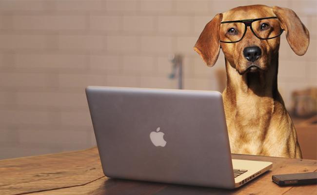 computer-dog-names